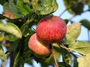 fruit-973277_960_720